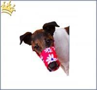 Hundemaulkorb Red Magaritte