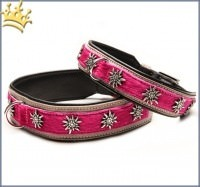 Hundehalsband Gipfelstürmer Pink