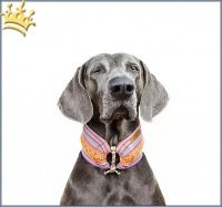 Duftmarke Halsschmeichler 5 Hundkleidung