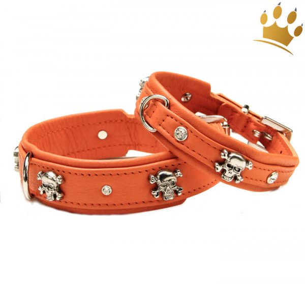 Hundehalsband Crazy Scully Orange