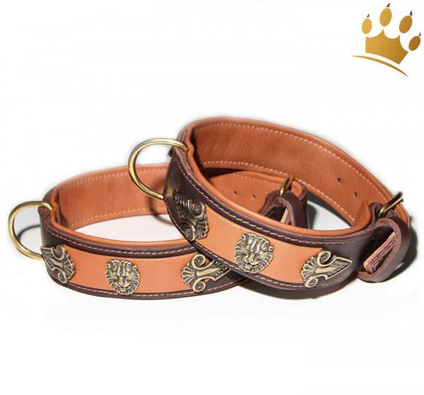 Hundehalsband Lion Selvaggio