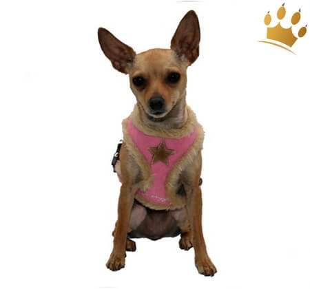 Softgeschirr Fur Pink Star