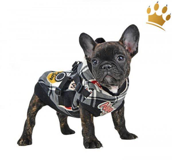Puppia Hundesweater Vernon Schwarz