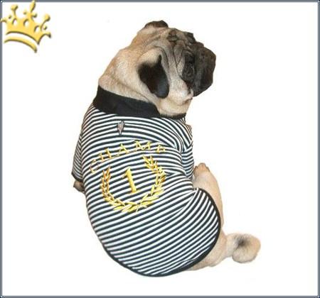 Hunde-Shirt CHAMP