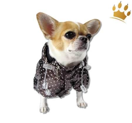 Hunderegenmantel Dotty Braun