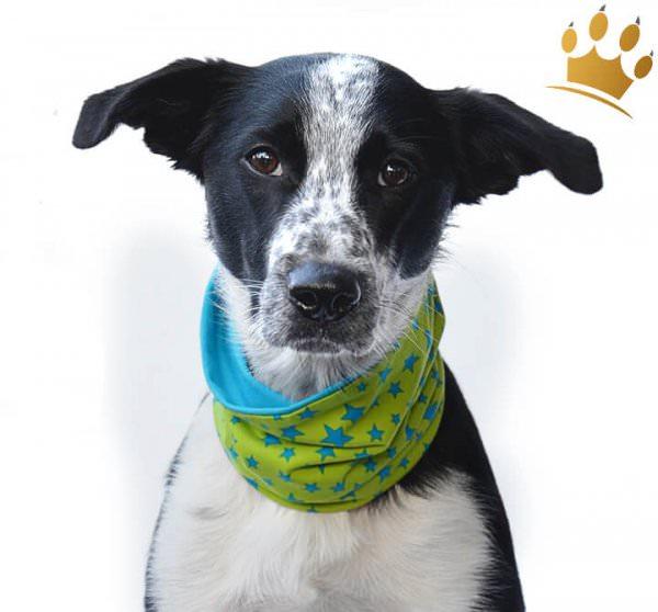 Hunde-Loop Schal Trend Dogstar