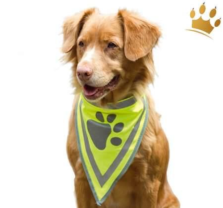 Hunde-Sicherheitshalstuch