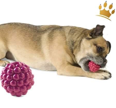 Hunde-Spielzeug Orbee-Tuff Rasberry
