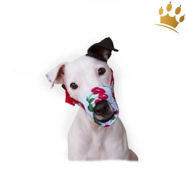 Hundemaulkorb Krasy Cherry