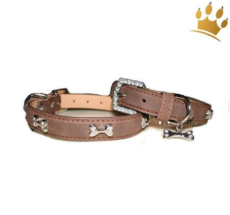 Hundehalsband Kingston Caramel