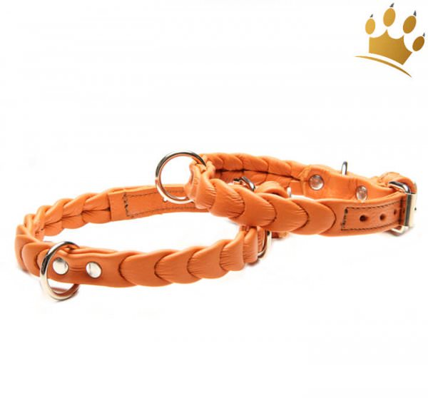Hundehalsband Ascot Petit Orange