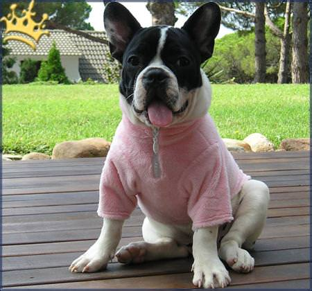 Hundepullover Sena Rosa