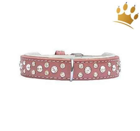 Hundehalsband Miami Pink 20mm