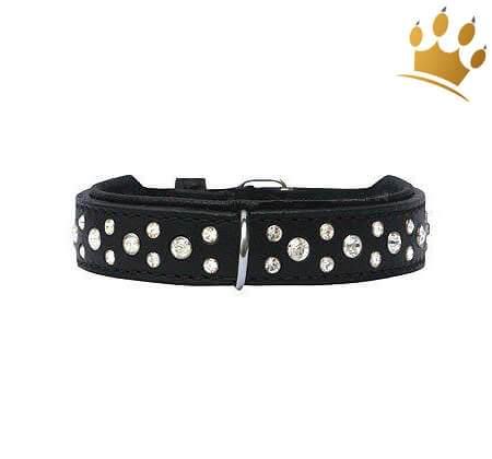 Hundehalsband Miami Black 20mm