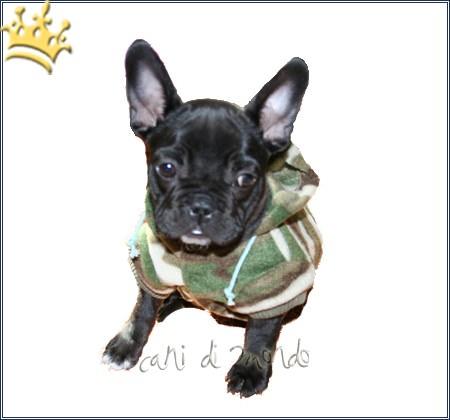 Hundejacke Camo Grün