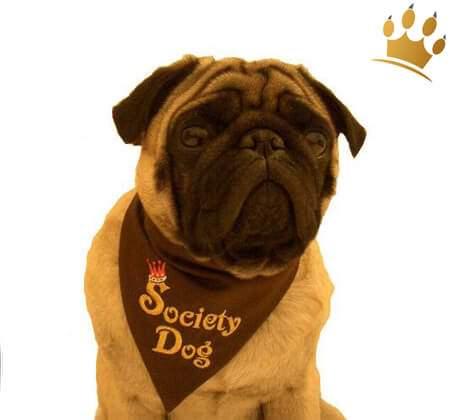 Bandana Society Dog