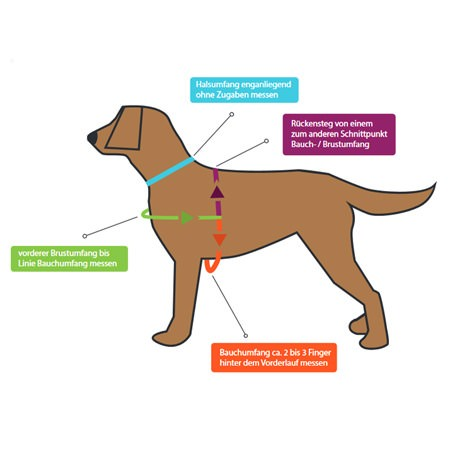 Groessenvorlage Hundegeschirr