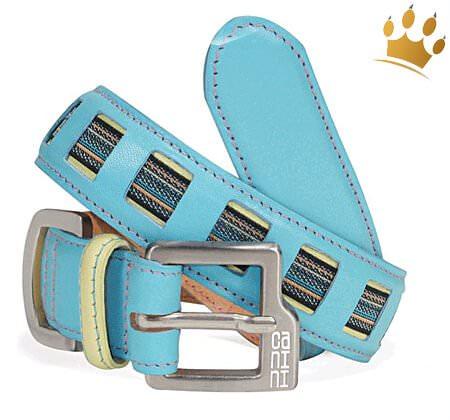 Hundehalsband Canini® Speedster Blau
